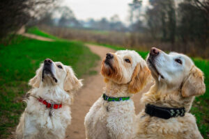 Read more about the article Homemade Dog Treats – Value and Nutrition for Your Pet