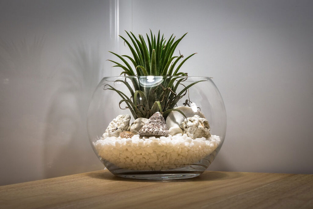 Make a Simple DIY Plant Terrarium