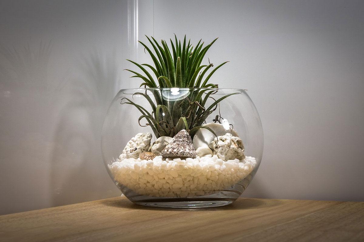 Read more about the article Make a Simple DIY Plant Terrarium