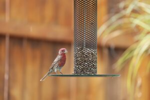 Read more about the article Enjoy Spring with a DIY Bird Feeder