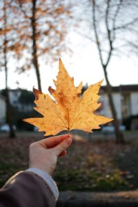 Read more about the article How to Make Outdoor Decorations That Celebrate the Fall Spirit